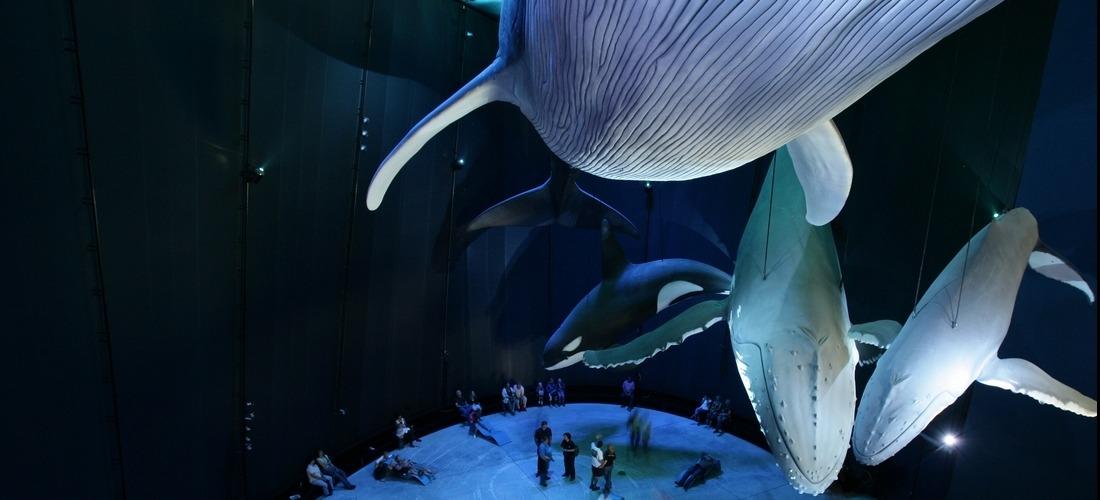 Ozeaneum Strahlsund, Greenpeace Sonderausstellung: Riesen der Meere 1:1